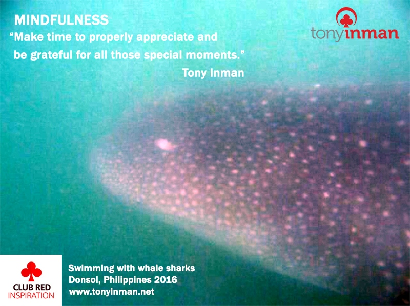 MINDFULNESS-whale-sharks-Donsol-2016