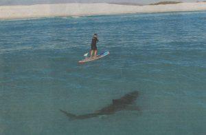 Shark Aware
