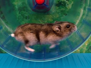 coaching can get you off the hamster wheel